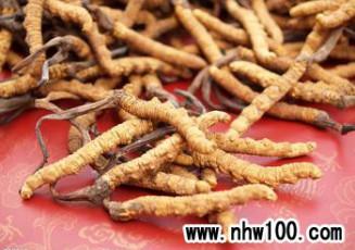 产量锐减贵比黄金——虫草产业恶性循环何日终结