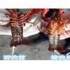 供应:小龙虾超声波清洗机